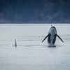 Orca Big Breach