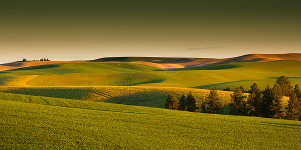 Rolling Green in the Palouse