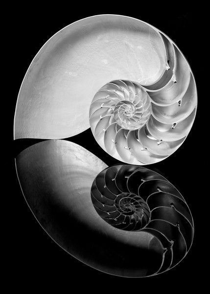 Spiral Reflection
