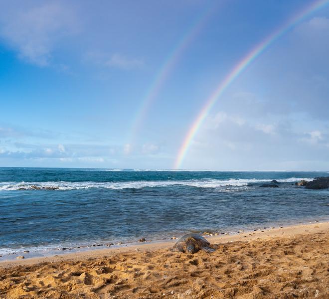 Maui Rainbow and Turtle