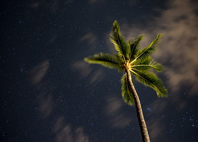 Night Sky Palm
