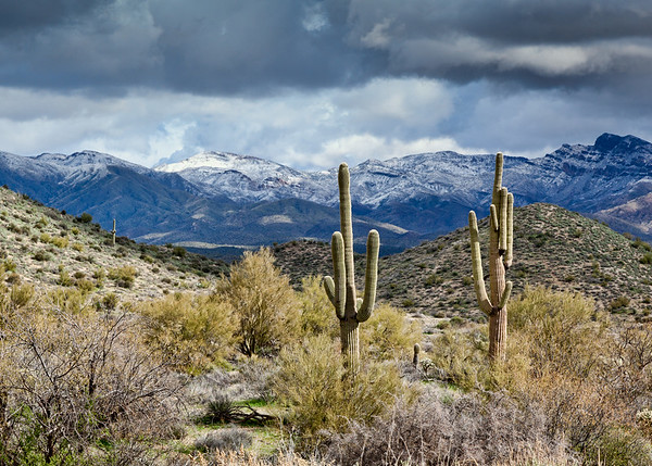 Saguaros and Snowy Mountains