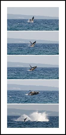 072-hj whale breach-2