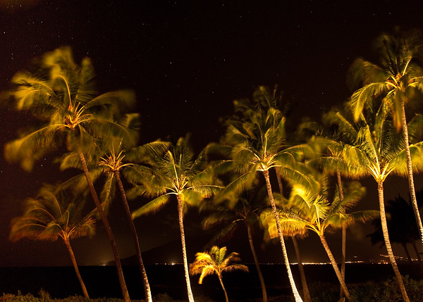 Night Time Palms