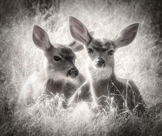 Twin Cuteness