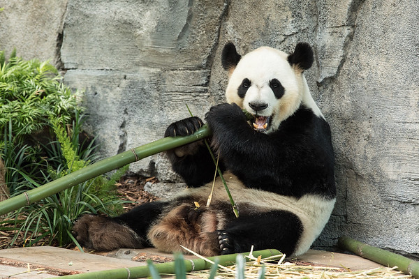 Bamboo for Breakfast, Lunch and Dinner