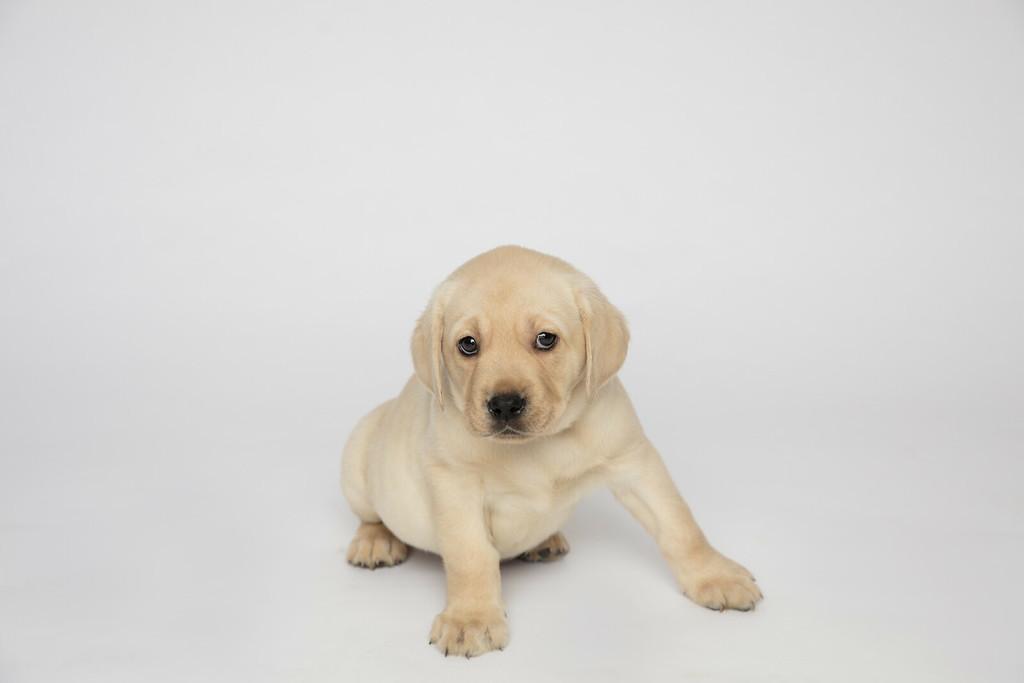 Dog 5