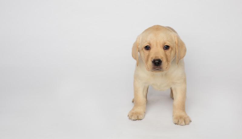 Dog 14