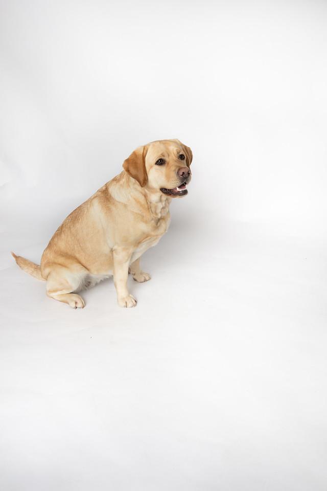 Dog 20