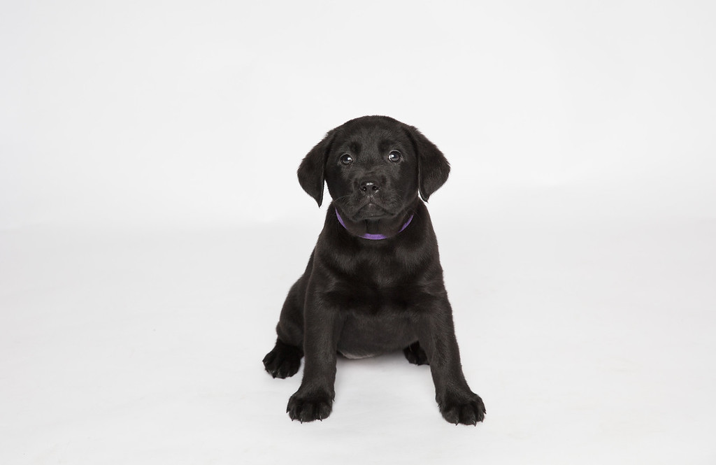 Dog 23