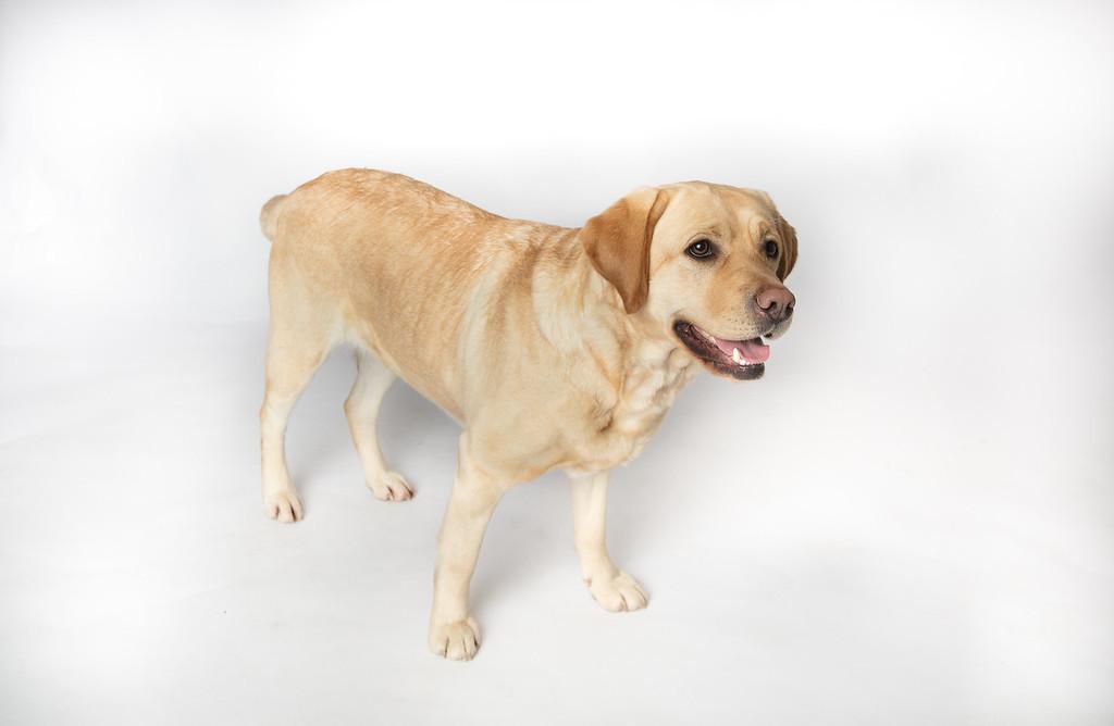Dog 22