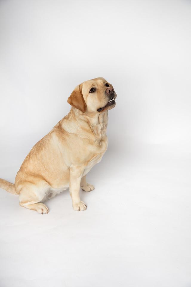 Dog 18