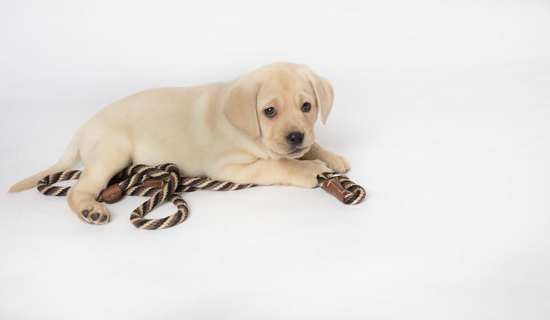 Dog 27