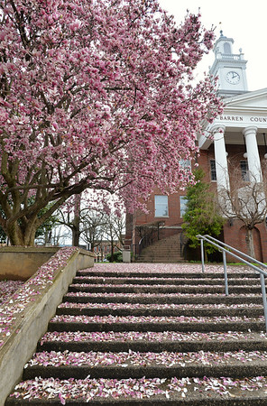 Spring blooms at the Barren County Courthouse