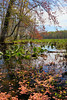 KY GRAND RIVERS LAND BETWEEN THE LAKES NRA NATURE STATION HEMATITE TRAIL HEMATITE LAKE APRAF_MG_7171MMW