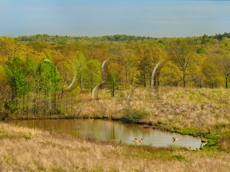 KY GOLDEN POND LAND BETWEEN THE LAKES NRA Elk and Bison Prairie APRAF_4150685eMMW