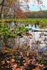 KY GRAND RIVERS LAND BETWEEN THE LAKES NRA NATURE STATION HEMATITE TRAIL HEMATITE LAKE APRAF_MG_7243MMW
