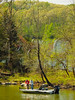 KY GOLDEN POND LAND BETWEEN THE LAKES NRA LAKE BARKLEY DEVILS ELBOW  APRAF_4160040MMW