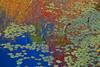 KY PARK CITY MAMMOTH CAVE NP SLOANS CROSSING POND SUNRISE APRAF_MG_6332bMMW