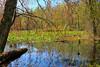 KY GRAND RIVERS LAND BETWEEN THE LAKES NRA NATURE STATION HEMATITE TRAIL HEMATITE LAKE APRAF_MG_6964MMW