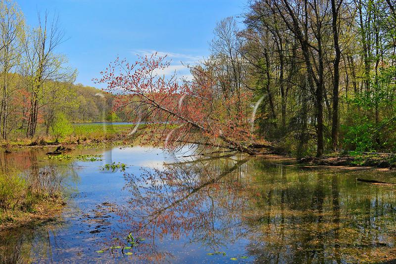 KY GRAND RIVERS LAND BETWEEN THE LAKES NRA NATURE STATION HEMATITE TRAIL HEMATITE LAKE APRAF_MG_7030MMW