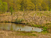 KY GOLDEN POND LAND BETWEEN THE LAKES NRA Elk and Bison Prairie APRAF_4150682bMMW