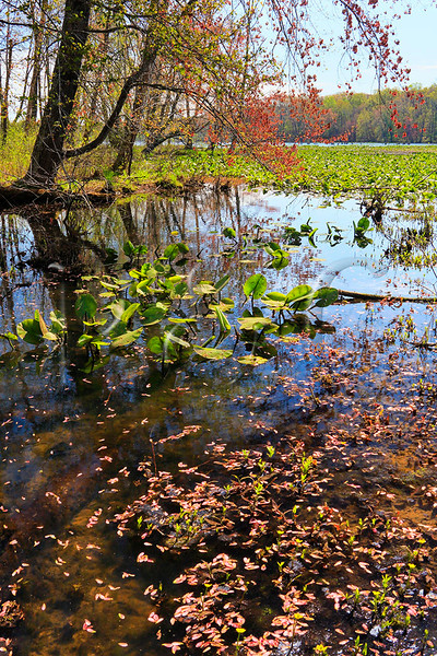 KY GRAND RIVERS LAND BETWEEN THE LAKES NRA NATURE STATION HEMATITE TRAIL HEMATITE LAKE APRAF_MG_6994bMMW