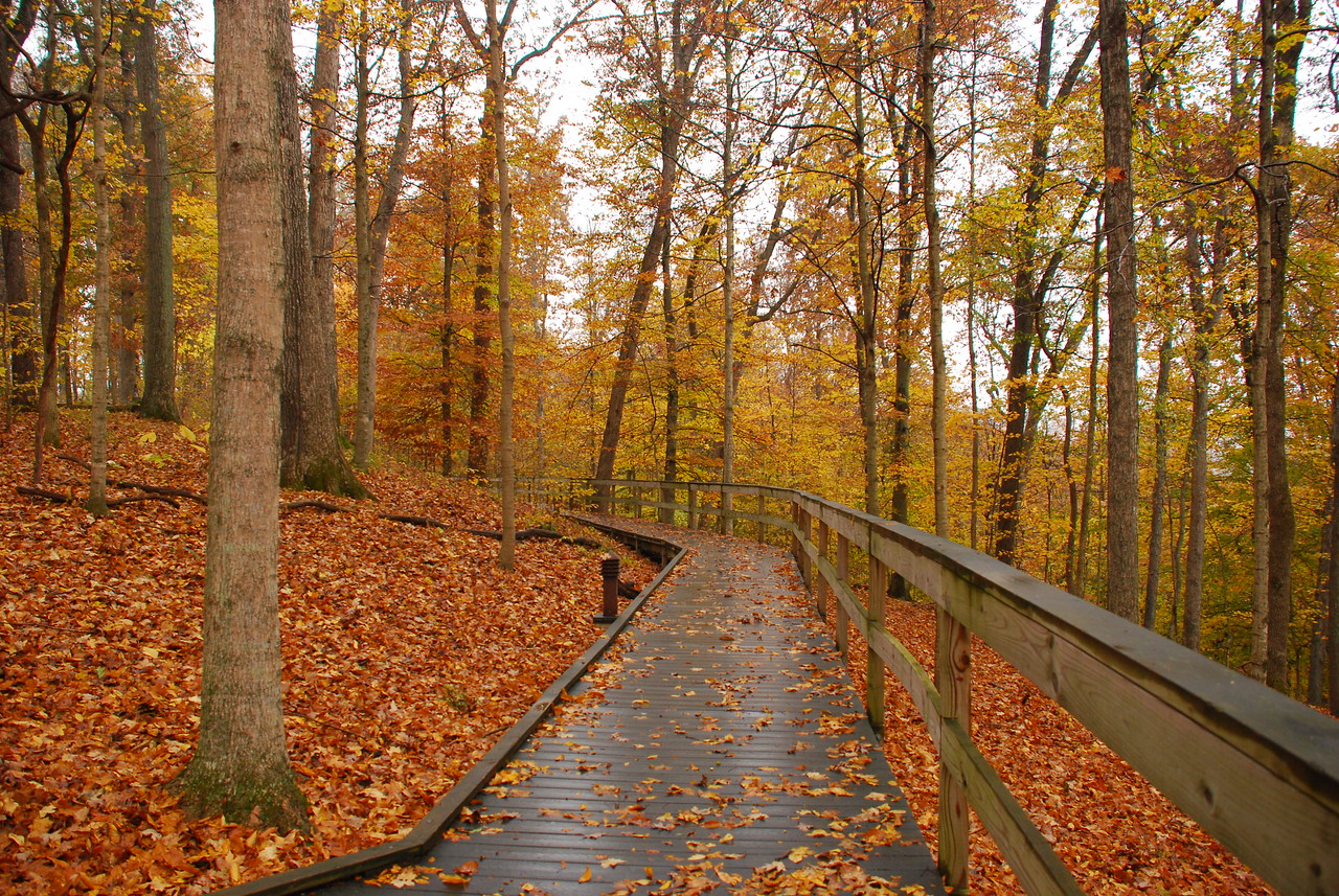 Trail at Mammoth Cave National Park