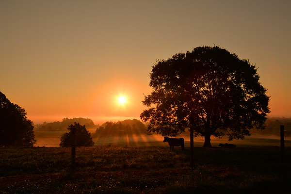 Sunrise on a farm in Metcalfe County, KY