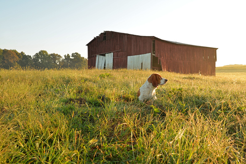 Max standing guard at the Smith family farm