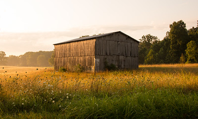 Beautiful barn in morning light. Metcalfe County, KY