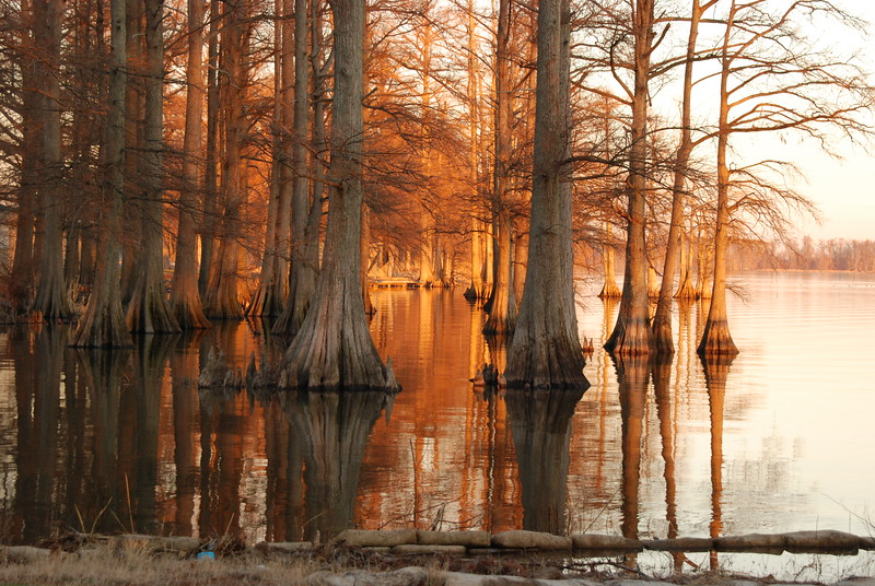 Golden sunrise at Reelfoot Lake