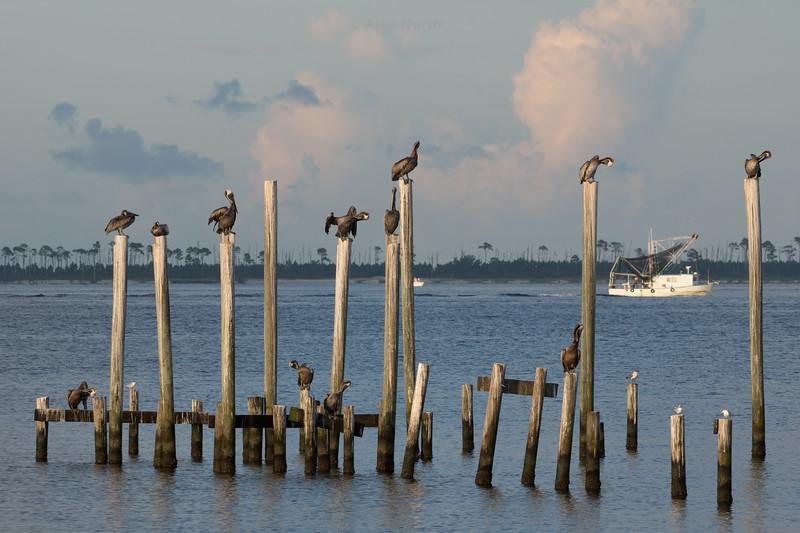 Birds-PelicansOSDI0816