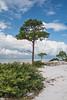 Horn-Beach1