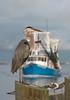 Birds-BHShrimpboat