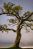 MW-tree0419