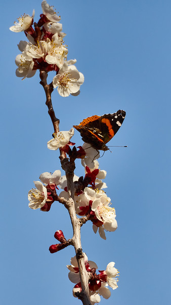 _3260233 Butterfly Moth on Blossom_1944x3456