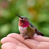 _5130039_Recovering_Hummingbird_1988x1988