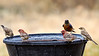 _6250125_Bluebird and Finches_3538x1990_1988x1118