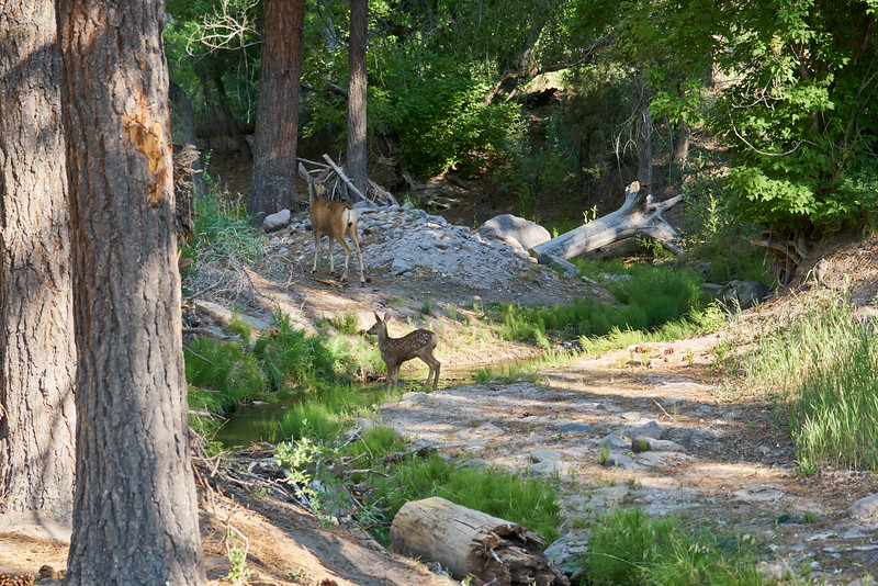 _DSC2158_Deer near Creek_5916x3944_2400x1600