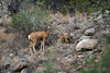 _DSC1607_Deer with Fawn_6000x4000_2400x1600