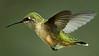 _DSC4993_Hummingbird 1_1988x1118_1280x720