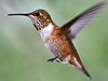 _DSC2450_Hummer hovering_3718x2789_Patch_2879x2160
