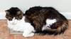 _1270002 Cat Rhumba_5079x2857_3840x2160_1920x1080