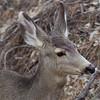 _2180065 Deer Head Portrait_2120x2120