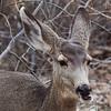 _2180285 Deer chewing 2_2260x2260