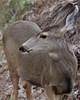 _2180060 Deer Head sideways_2350x2950