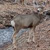 _2180407 Deer Frijoles Creek_2602x2602