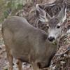 _2180050 Sharp Portrait of Deer chewing_2929x2929