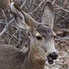 _2180284 Deer chewing 1_2260x2260